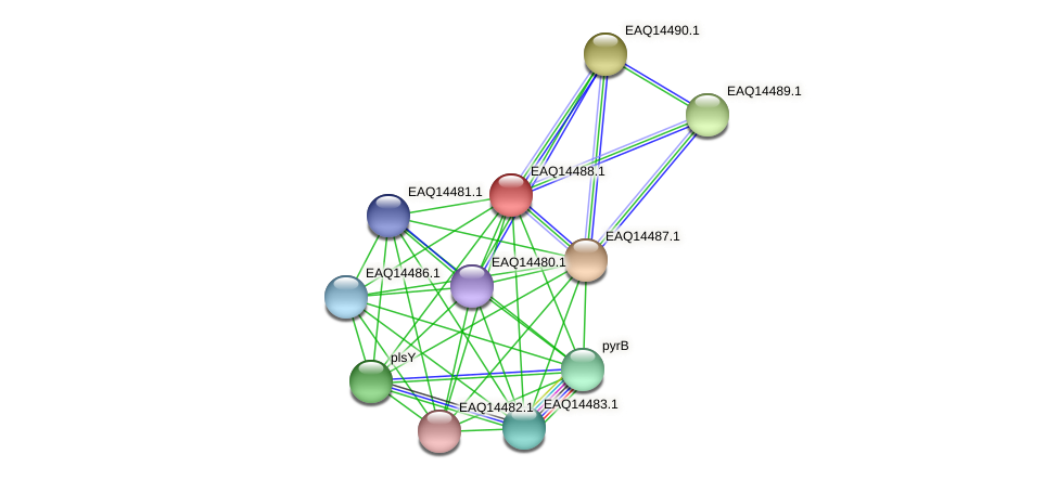 RB2654_17501 protein (Maritimibacter alkaliphilus) - STRING interaction network