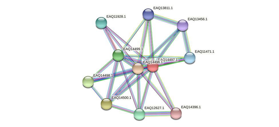 RB2654_17546 protein (Maritimibacter alkaliphilus) - STRING interaction network