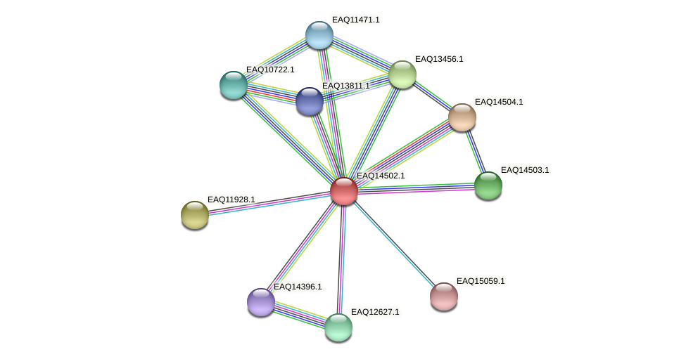 RB2654_17571 protein (Maritimibacter alkaliphilus) - STRING interaction network