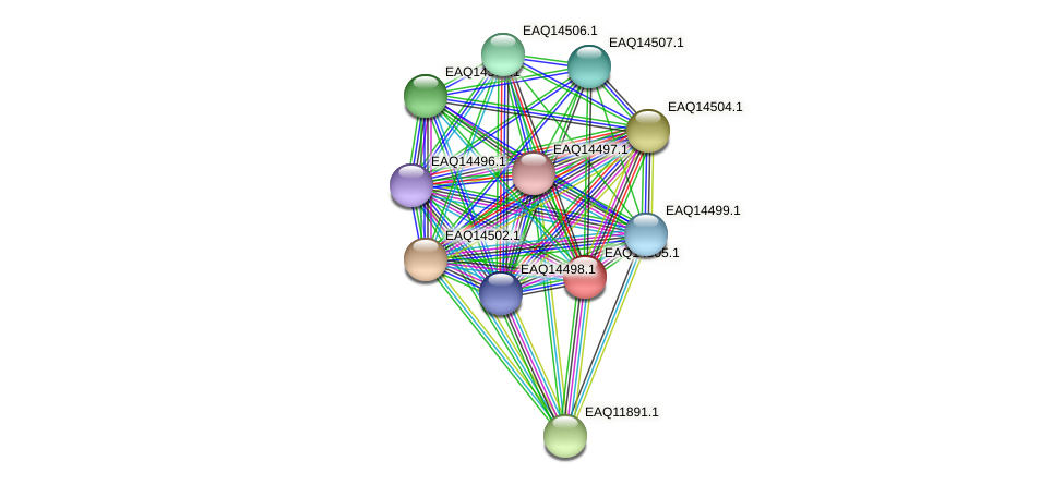 RB2654_17586 protein (Maritimibacter alkaliphilus) - STRING interaction network