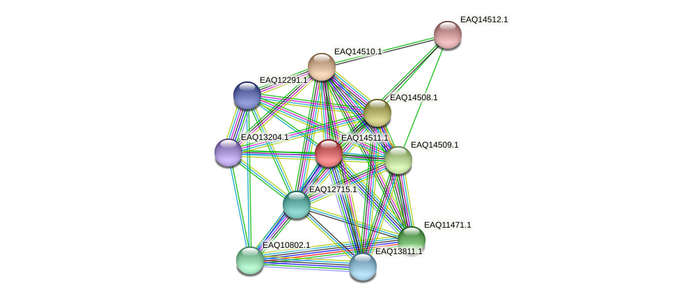 RB2654_17616 protein (Maritimibacter alkaliphilus) - STRING interaction network