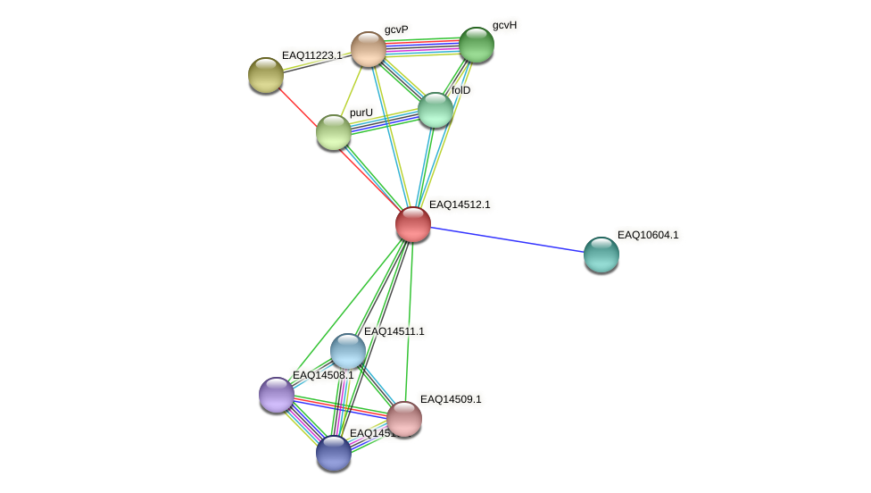 RB2654_17621 protein (Maritimibacter alkaliphilus) - STRING interaction network