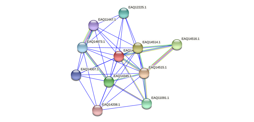 RB2654_17626 protein (Maritimibacter alkaliphilus) - STRING interaction network