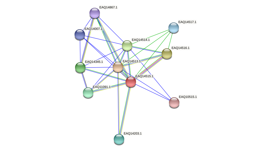 RB2654_17636 protein (Maritimibacter alkaliphilus) - STRING interaction network