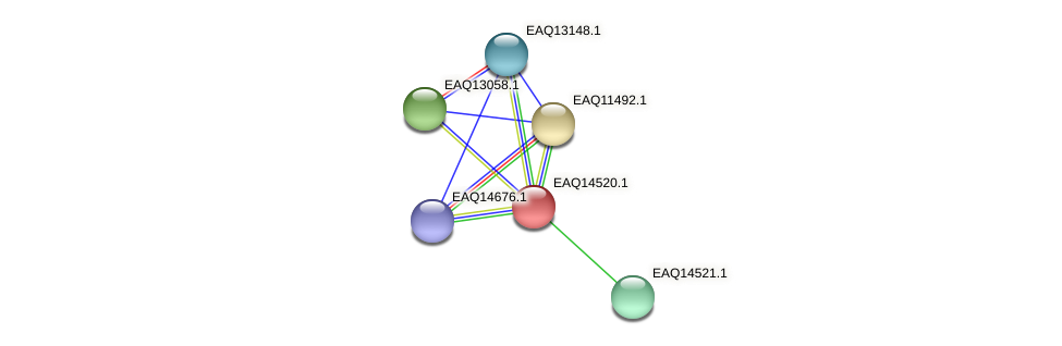 RB2654_17661 protein (Maritimibacter alkaliphilus) - STRING interaction network