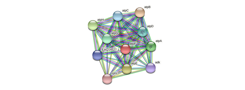 RB2654_17691 protein (Maritimibacter alkaliphilus) - STRING interaction network