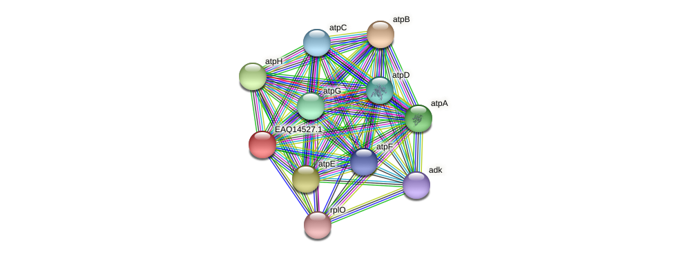 RB2654_17696 protein (Maritimibacter alkaliphilus) - STRING interaction network