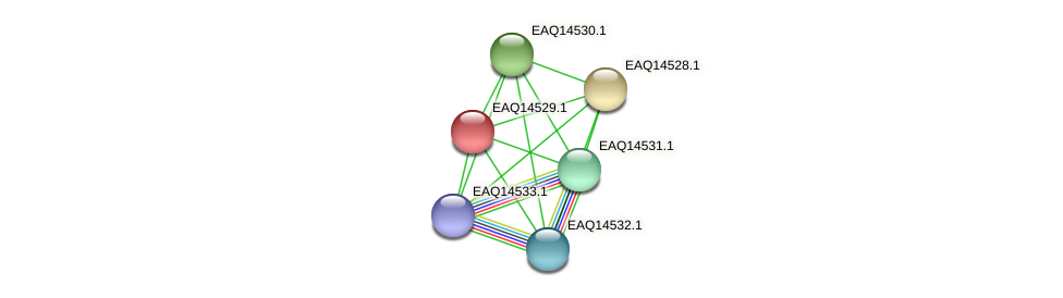 RB2654_17706 protein (Maritimibacter alkaliphilus) - STRING interaction network
