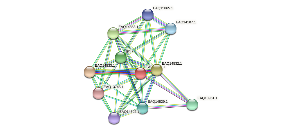RB2654_17716 protein (Maritimibacter alkaliphilus) - STRING interaction network