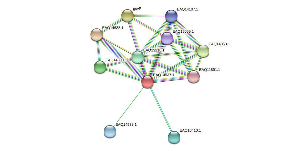 RB2654_17746 protein (Maritimibacter alkaliphilus) - STRING interaction network
