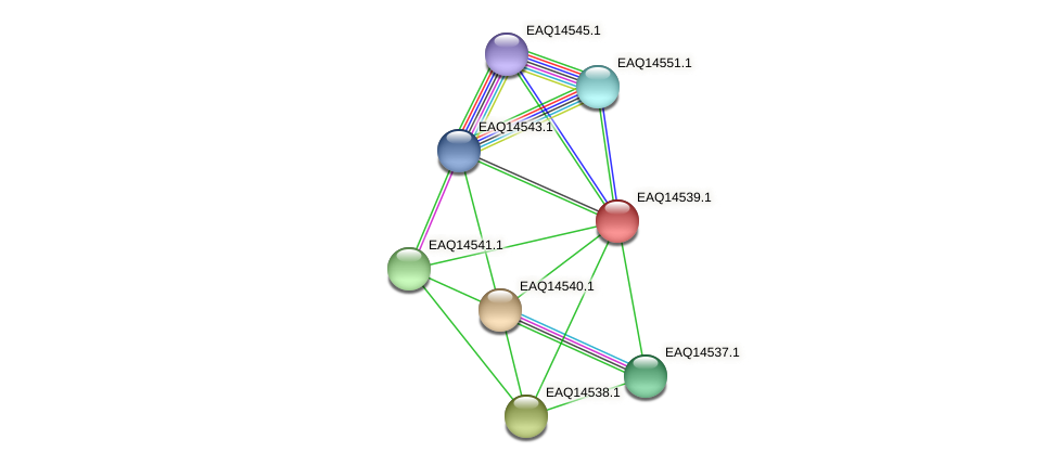 RB2654_17756 protein (Maritimibacter alkaliphilus) - STRING interaction network