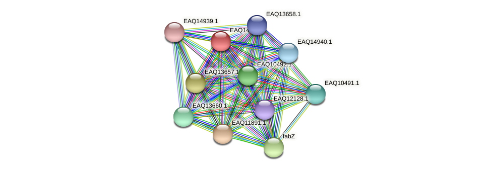 RB2654_17761 protein (Maritimibacter alkaliphilus) - STRING interaction network
