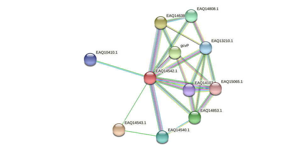 RB2654_17771 protein (Maritimibacter alkaliphilus) - STRING interaction network