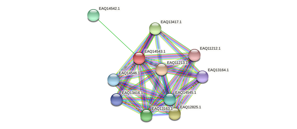 RB2654_17776 protein (Maritimibacter alkaliphilus) - STRING interaction network