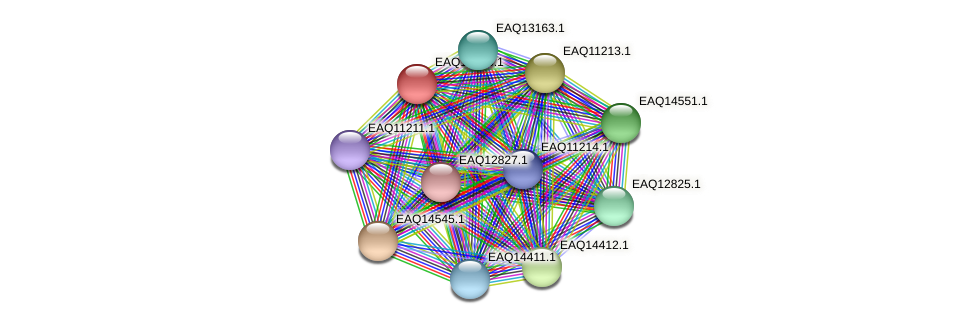 RB2654_17791 protein (Maritimibacter alkaliphilus) - STRING interaction network