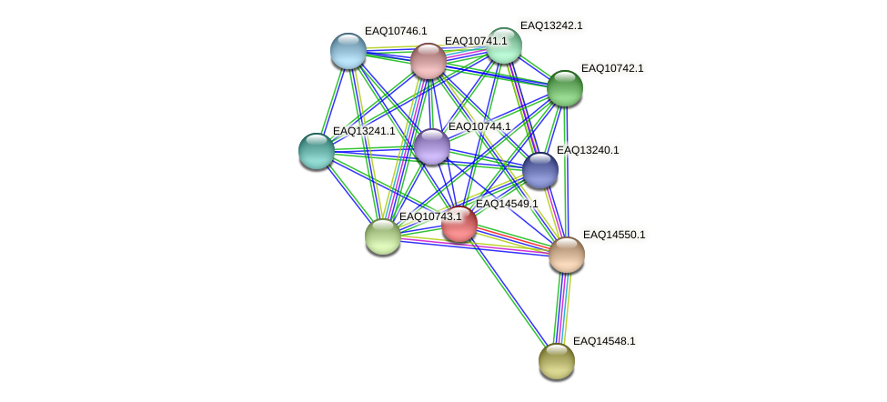 RB2654_17806 protein (Maritimibacter alkaliphilus) - STRING interaction network