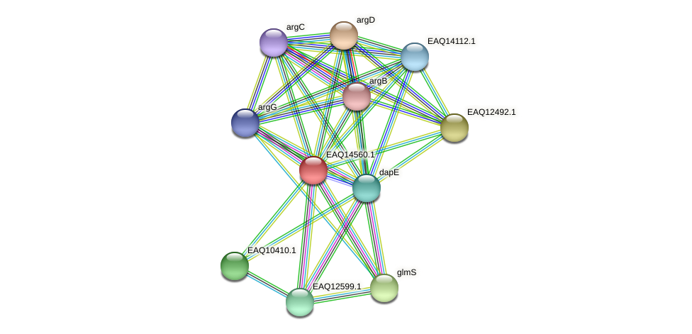 RB2654_17861 protein (Maritimibacter alkaliphilus) - STRING interaction network