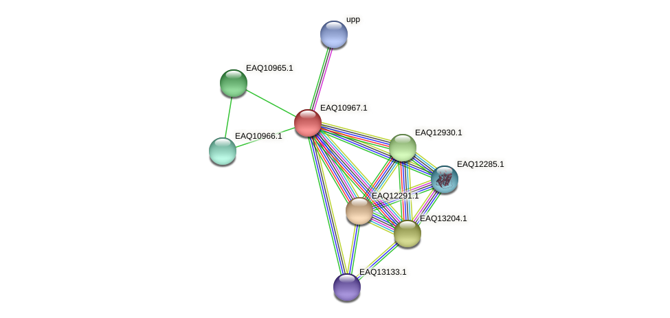 RB2654_17896 protein (Maritimibacter alkaliphilus) - STRING interaction network
