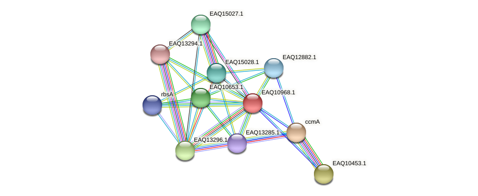 RB2654_17901 protein (Maritimibacter alkaliphilus) - STRING interaction network