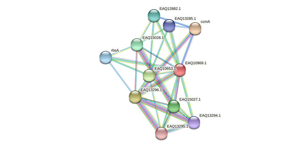 RB2654_17906 protein (Maritimibacter alkaliphilus) - STRING interaction network