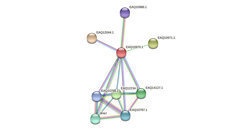 RB2654_17911 protein (Maritimibacter alkaliphilus) - STRING interaction network