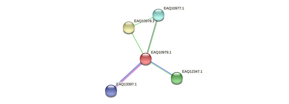 RB2654_17956 protein (Maritimibacter alkaliphilus) - STRING interaction network
