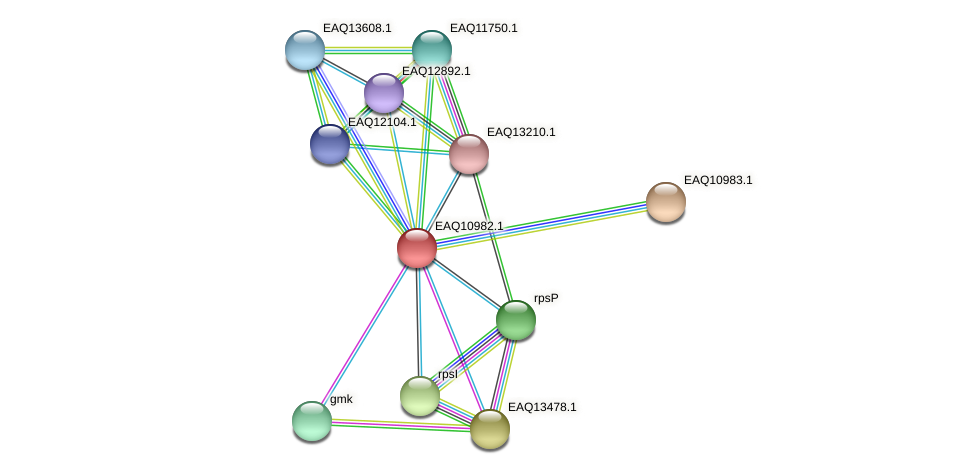 RB2654_17971 protein (Maritimibacter alkaliphilus) - STRING interaction network