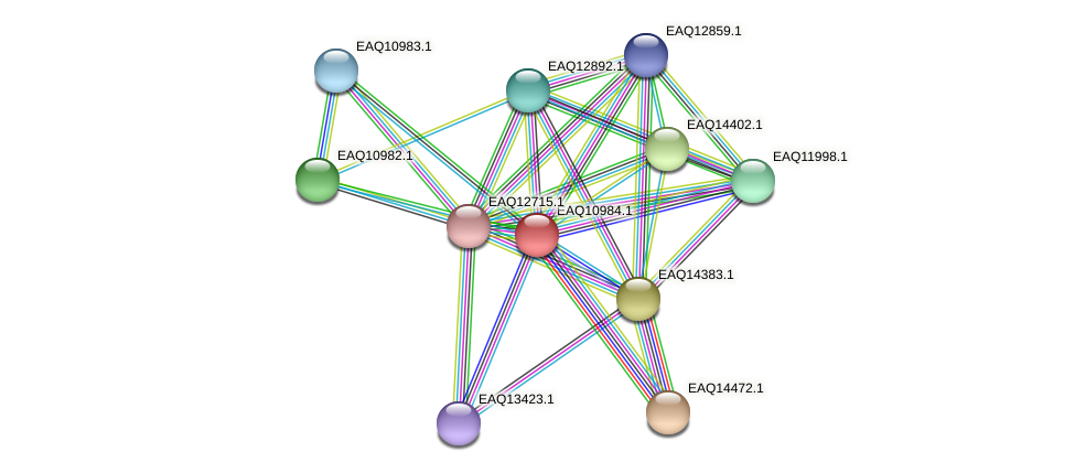 RB2654_17981 protein (Maritimibacter alkaliphilus) - STRING interaction network