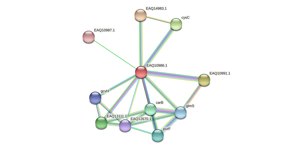 RB2654_17991 protein (Maritimibacter alkaliphilus) - STRING interaction network