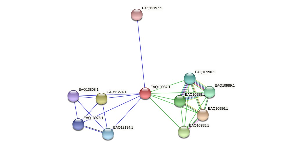 RB2654_17996 protein (Maritimibacter alkaliphilus) - STRING interaction network