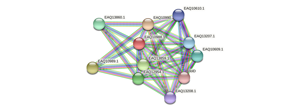 RB2654_18001 protein (Maritimibacter alkaliphilus) - STRING interaction network
