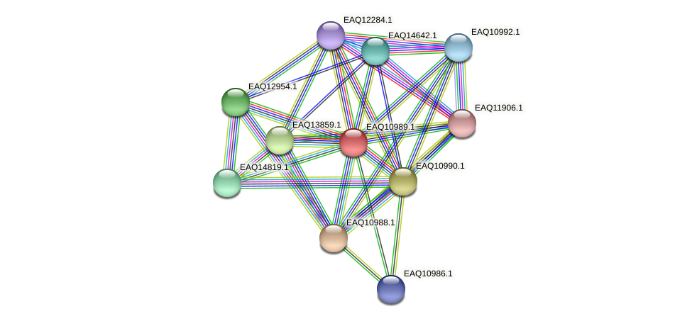 RB2654_18006 protein (Maritimibacter alkaliphilus) - STRING interaction network