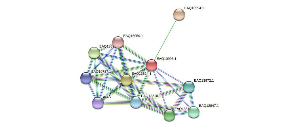 RB2654_18026 protein (Maritimibacter alkaliphilus) - STRING interaction network