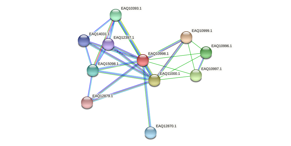 RB2654_18051 protein (Maritimibacter alkaliphilus) - STRING interaction network