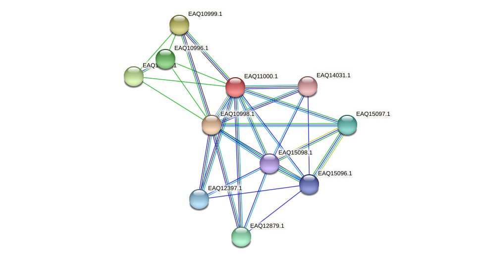 RB2654_18061 protein (Maritimibacter alkaliphilus) - STRING interaction network