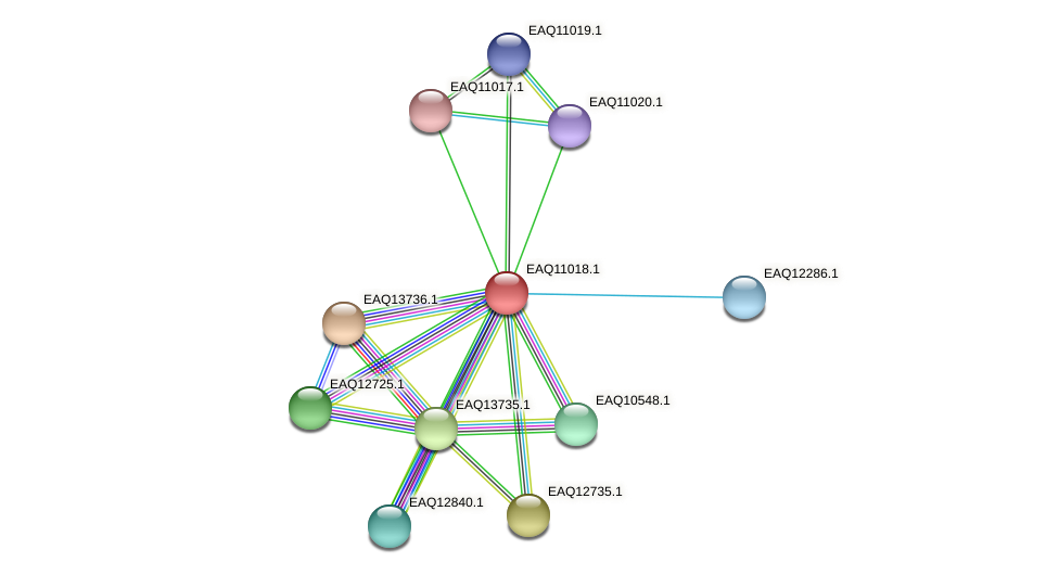 RB2654_18151 protein (Maritimibacter alkaliphilus) - STRING interaction network