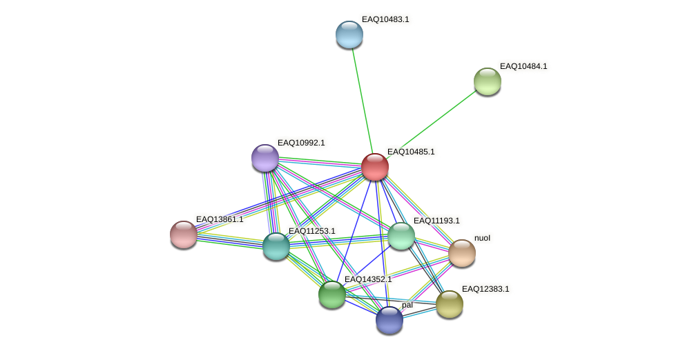 RB2654_18238 protein (Maritimibacter alkaliphilus) - STRING interaction network