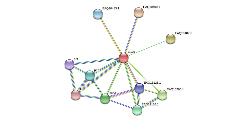 miaB protein (Maritimibacter alkaliphilus) - STRING interaction network