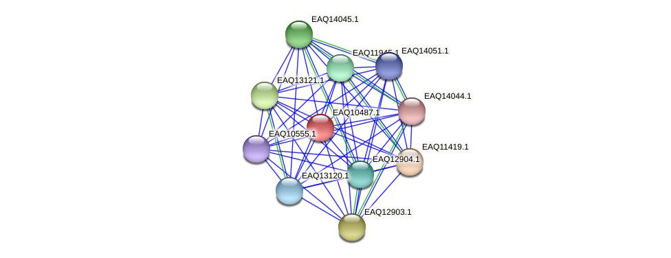 RB2654_18248 protein (Maritimibacter alkaliphilus) - STRING interaction network