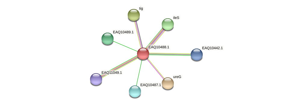 RB2654_18253 protein (Maritimibacter alkaliphilus) - STRING interaction network