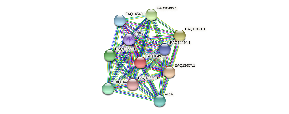 RB2654_18273 protein (Maritimibacter alkaliphilus) - STRING interaction network