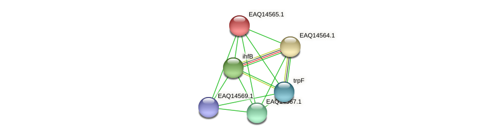 RB2654_18318 protein (Maritimibacter alkaliphilus) - STRING interaction network