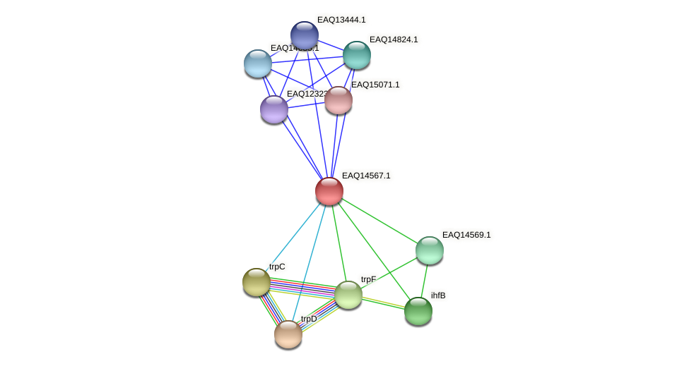 RB2654_18328 protein (Maritimibacter alkaliphilus) - STRING interaction network