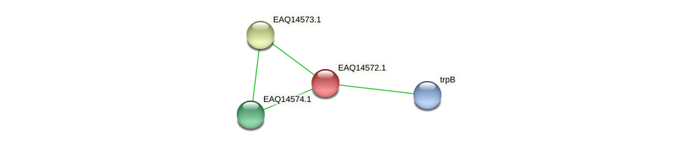 RB2654_18353 protein (Maritimibacter alkaliphilus) - STRING interaction network