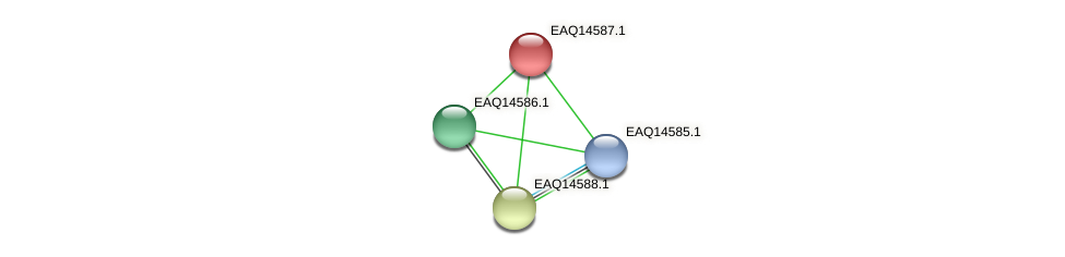 RB2654_18428 protein (Maritimibacter alkaliphilus) - STRING interaction network