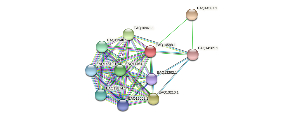RB2654_18433 protein (Maritimibacter alkaliphilus) - STRING interaction network