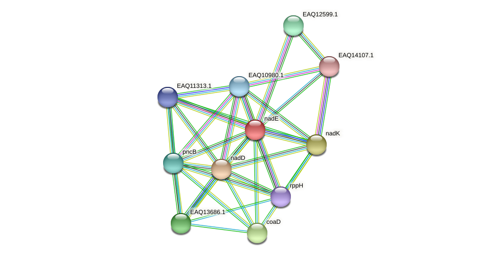 RB2654_18443 protein (Maritimibacter alkaliphilus) - STRING interaction network