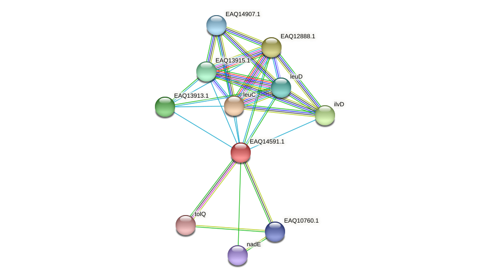 RB2654_18448 protein (Maritimibacter alkaliphilus) - STRING interaction network