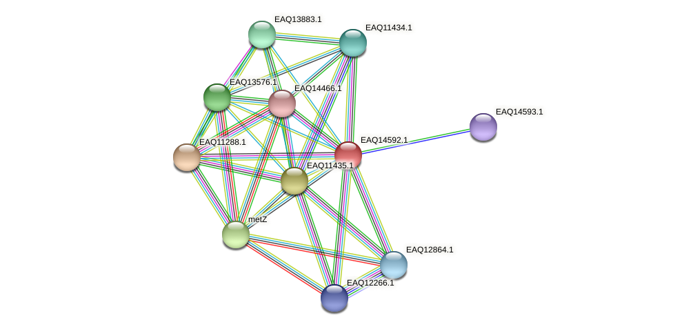 RB2654_18453 protein (Maritimibacter alkaliphilus) - STRING interaction network