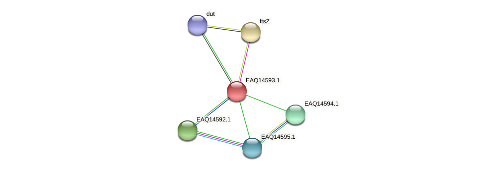 RB2654_18458 protein (Maritimibacter alkaliphilus) - STRING interaction network
